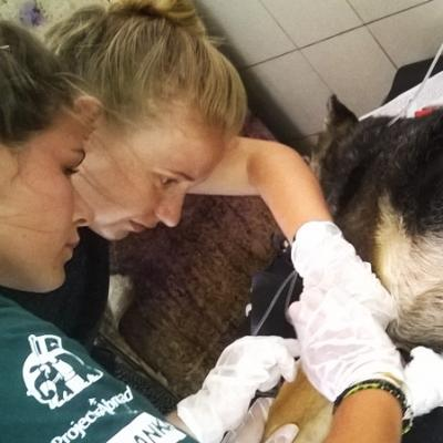 Volunteers gain Veterinary Medicine work experience in Sri Lanka while tending to a wounded dog.